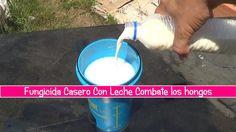 Fungicida Casero Con Leche