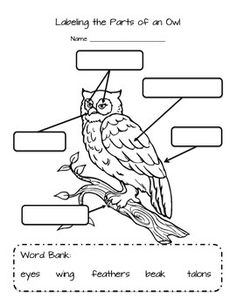 Worksheet for labeling the parts of an owl: eyes, beak, talons, wings and feathers