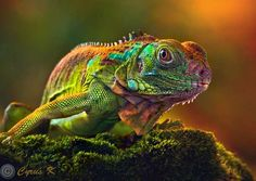 World's Most Colorful Insect | Animals Foto1 Beautiful Images Of Animals