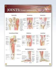 Joints: Lower Extremities 20x26 Anatomy Poster