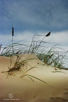 Dune and Beach Grass on Padre Island National Seashore