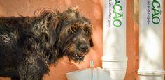 Muitos cães e gatos vivem nas ruas de praticamente todas as cidades do Brasil, sofrendo com a fome, a sede e o abandono. Para tentar amenizar pelo menos um pouco o sofrimento dos bichinhos, foi lançado no mês passado em Americana, c