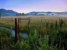 Field stream outside of Trout Lake Washington. White Salmon, Field Of Dreams, Washington State, Trout, That Way, Lightroom, Fields, The Outsiders, Sunrise