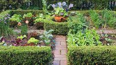 gemüse planer Closer To Nature, Edible Garden, Flora, Backyard, Green, Plants, Beautiful, Gardening, Gardens