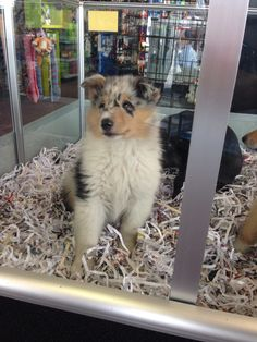 This little one is up for adoption at Animal City in Murfreesboro, TN. How cute!