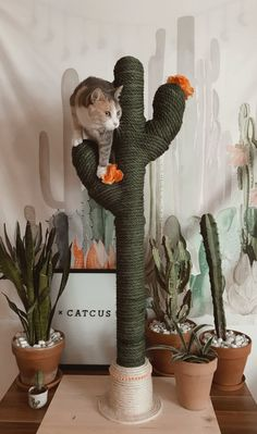 Cactus for cats catcus scratching post cat tree boho cat tower funny farm animals cattle mini cows Cat Scratching Tree, Best Cat Scratching Post, Cat Tree Designs, Cactus Cat, Cactus Plants, Diy Cat Tree, Best Cat Tree, Cool Cat Trees, Cat Room