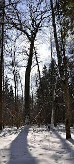 Puszcza Białowieska: Ze słońcem i pod słońce