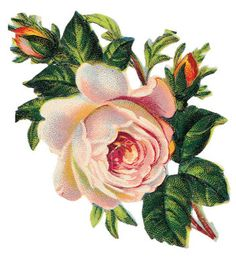 http://2.fimagenes.com/i/3/7/22/gr_280370_3840587_332701.jpg