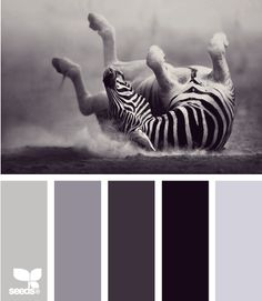 zebra tones....yes the colors, and what is it about animals doing this??? My friend has an older dog that just started this in his old age and he loves it for 10 min at time. Great!!!