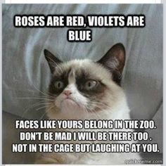 14 Hilarious Grumpy Cat Memes That Will Make You Smile - Funny Cat Quotes Grumpy Cat Quotes, Funny Grumpy Cat Memes, Funny Animal Jokes, Cat Jokes, Cute Funny Animals, Funny Relatable Memes, Funny Cats, Funny Quotes, Grumpy Kitty