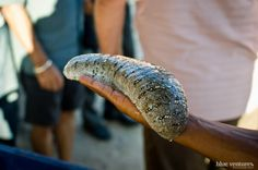 Farming Sea Cucumbers in Madagascar…for Economic Hope and Conservation