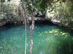 Cenote Verde Lucero, Puerto Morelos: See 59 reviews, articles, and 17 photos of…