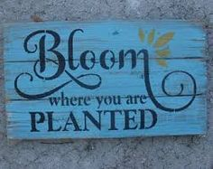Image result for bloom quote