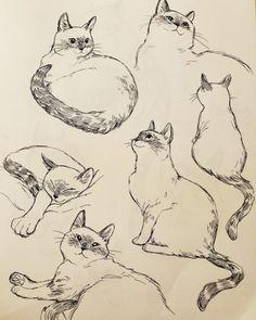 动物与宠物 Baby Care baby care and dress up Cat Sketch, Drawing Sketches, Drawing Poses, Animal Sketches, Animal Drawings, Posca Art, Art Reference Poses, Cat Reference, Warrior Cats