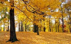 Find the best Tree wallpaper on WallpaperTag. We have a massive amount of desktop and mobile backgrounds. Beautiful Wallpaper Hd, Tree Hd Wallpaper, Forest Wallpaper, Fall Wallpaper, Nature Wallpaper, Desktop Wallpapers, Autumn Nature, Autumn Trees, Forest Background
