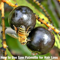 How to Use Saw Palmetto for Hair Loss or Balding Treatment - Stylish Walks