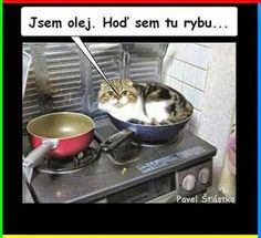 Jsem olej. Hoď sem tu rybu... Funny Fails, Funny Jokes, Good Jokes, The Funny, Haha, Laughter, Funny Pictures, Laughing, Pictures