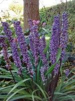 Schaduwplanten voor de tuin, er is keuze genoeg | Huis en Tuin: Tuin