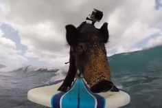 surfing animal 2