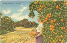 oranges ~ florida