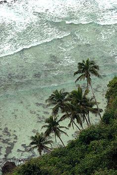 Photography of palm island