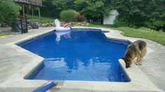 Filling inground pool. One happy dog.