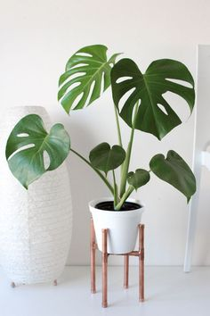 Raised Copper Pot Plant Stand DIY // Tutorial - Pure Sweet Joy - Raised Copper Pipe Pot Plant Is really a few points to assist you to properly increase your brand new plants. House Plants Decor, Plant Decor, Plant Art, Low Maintenance Indoor Plants, Plantas Indoor, Decoration Plante, Home Decoration, Pot Plante, Diy Plant Stand