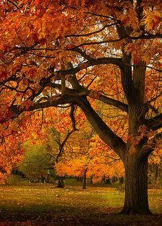 Red Oak Tree by Ludmila Nayvelt