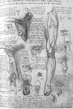 Leonardo's Sketchbooks