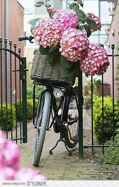 happy day out~ basket full of flowers
