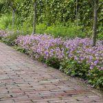 Gezinstuin voor het hele gezin bij vrijstaande woning te Alphen aan den Rijn. Hergebruik van materialen, behoud van (vrucht)bomen. Vaste planten, kruiden...