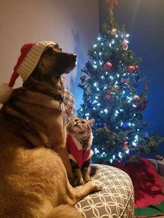 Our furbabies posing for a christmas photo via /r/aww...