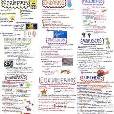 resumos de todos os filos ❤ #mapasbiologiabrenda