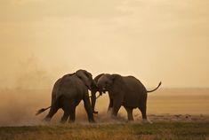 Passage To Africa - Amboseli - Kenya #Elephants