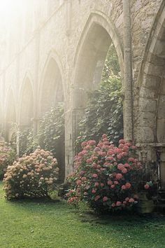 Mist in the old gardens under the arches