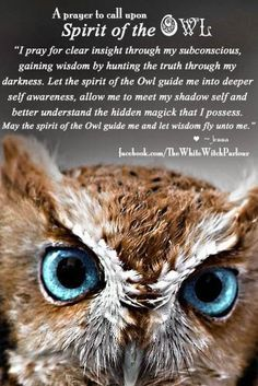 #owl #totem #animal #spirit #guide #nativeamerican #witch #shaman #healing #wisdom #spell #prayer #whitewitchparlour More at : https://www.facebook.com/TheWhiteWitchParlour