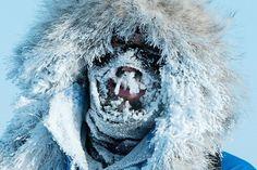Incroyable : en 57 jours et 5 100 kilomètres, le génial aventurier Mike Horn devient le premier homme à traverser l'Antarctique en solitaire !