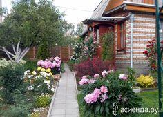Вертикальное озеленение участка: Группа Клумбы и цветники