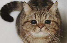 5 Dinge, die Deine Katze Dir gerne sagen würde