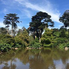 San Francisco Botanical Gardens.