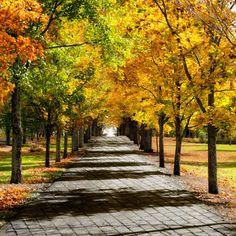 Fall Cobblestone Pathway by GreenIrisPhoto