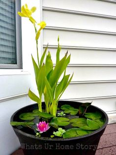 DIY Container Water Garden http://whatsurhomestory.com/diy-container-water-garden/
