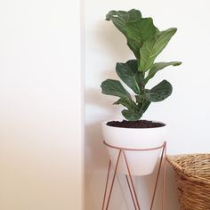 Love a good #diy  i spray painted this $5 @kmartaus plant stand with copper spray and i think it turned out pretty neat  all up this was $30 - plant stand and pot from #kmart and the fiddle leaf from #bunnings! Winning