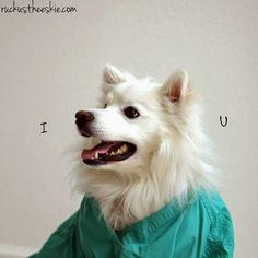 Ruckus the Eskie: Dr. Ruckus #Sit4Love