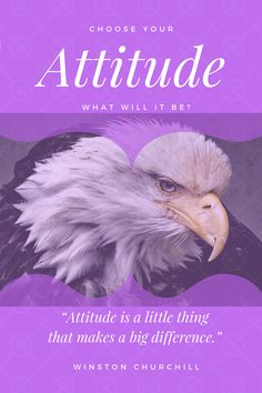 I have made up my mind how I am going to tackle 2018 - read more about it. Churchill, Bald Eagle, Attitude, Reading, Reading Books