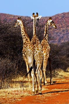 """""""The Three Musketeers"""" by Cai Priestley - taken in Namibia, Africa 2008*"""