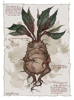 Harry Potter Mandrake - Pigmented ink fineliner, watercolor and a bit of Photoshop Harry Potter Poster, Arte Do Harry Potter, Harry Potter Drawings, Harry Potter Plants, Harry Potter Mandrake, Harry Potter Spells, Harry Potter Room, Mythological Creatures, Mythical Creatures
