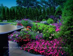 A NJ back yard in July. Hydrangea, Delphinium, Petunia, Dahlia, Geranium and Lythrum are in bloom.   Landscape architecture, landscape design, swimming pool design and construction services in the NJ and NY areas  Summerset Gardens Elegant Landscape Design, Fine Workmanship  845-590-7306  http://summersetgardens.com