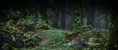 brave forest - Google Search