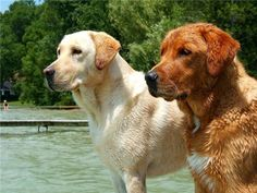 best friends at the lake……